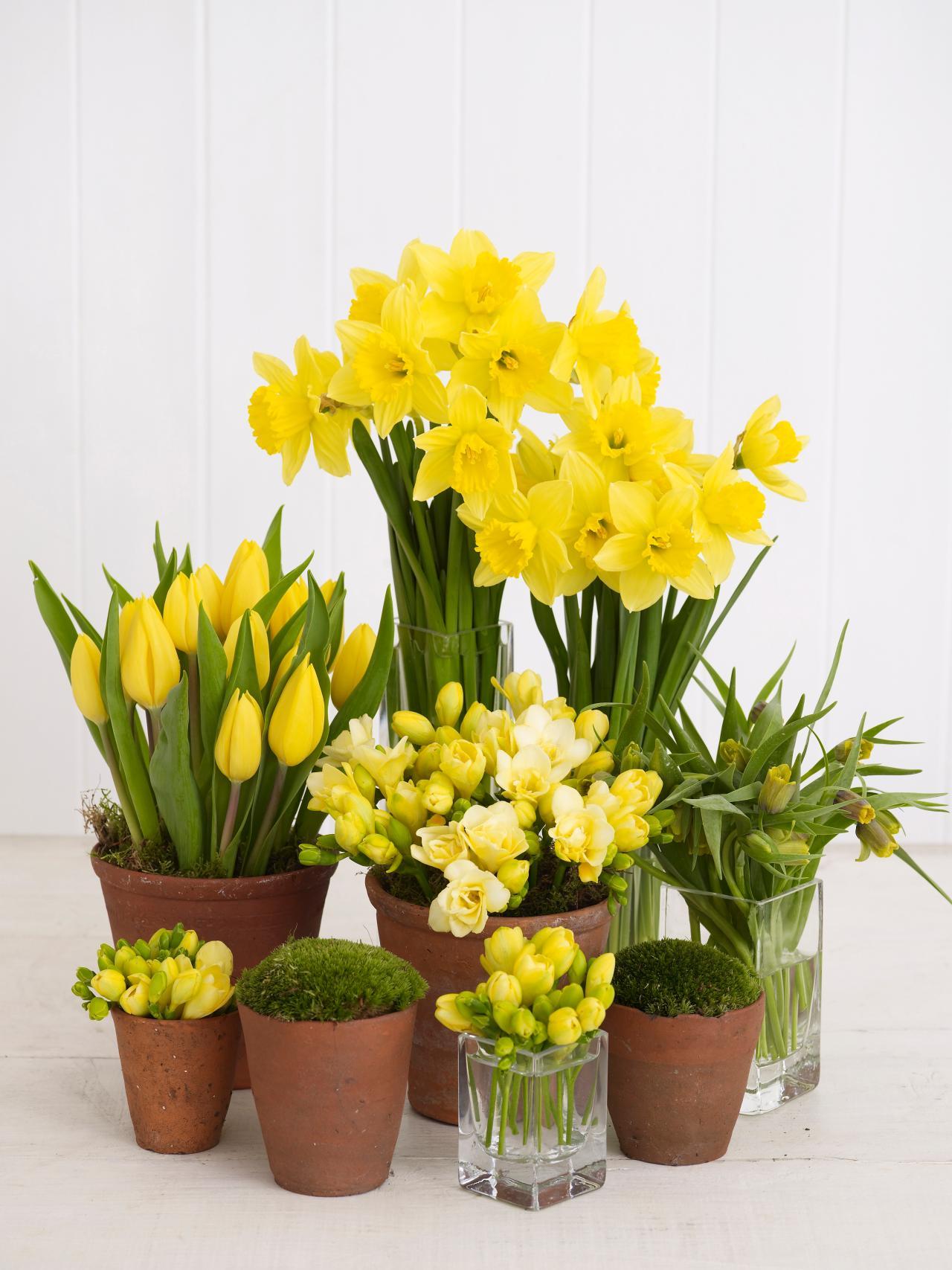 Spring Blooms | Revolving Decor